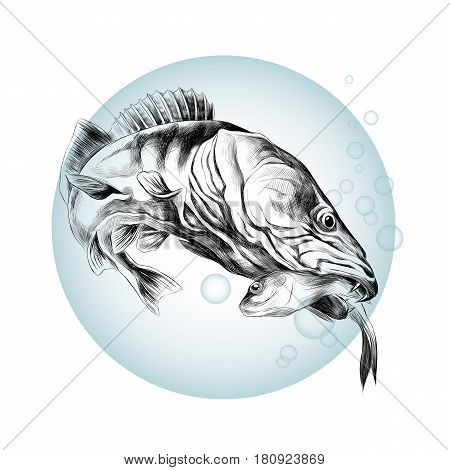predatory fish pike caught and is holding in its mouth a dead small fish sketch vector graphics black and white pattern on the background of blue circle with bubbles of air