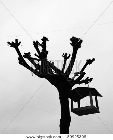 The silhouette of a severed tree on which a bird feeder hangs. Environment.