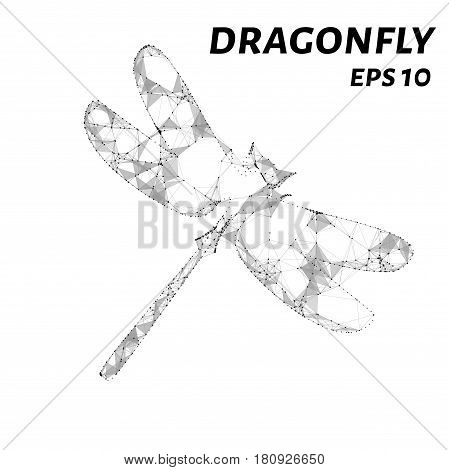 Dragonfly Consists Of Points, Lines And Triangles. The Polygon Shape In The Form Of A Silhouette Of