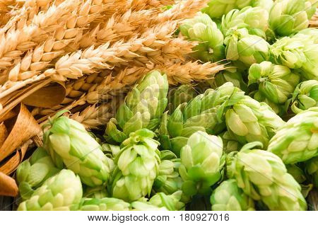 Green hops malt ears of barley and wheat grain ingredients to make beer and bread agricultural background