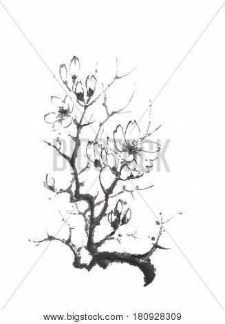 Blooming magnolia tree Japanese style original sumi-e ink painting. Great for greeting cards or texture design.