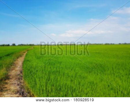 Blurred photo of paddy fields and walkways alongside the fields,Blurred photo can be background,paddy field field at harvest with walkway,Agriculture concept