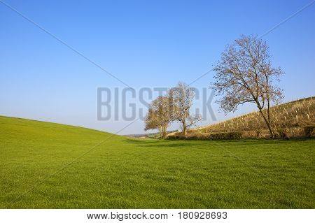 Scenic Grazing Meadows