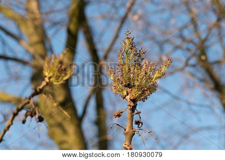 Tree Branch With Young Leaves In Spring
