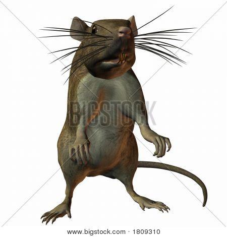 Rat Sit Up