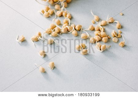 Chick Pea Sprouts Over Blue Paper Background.
