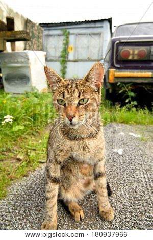 Homeless tabby cat is sitting on the ground.