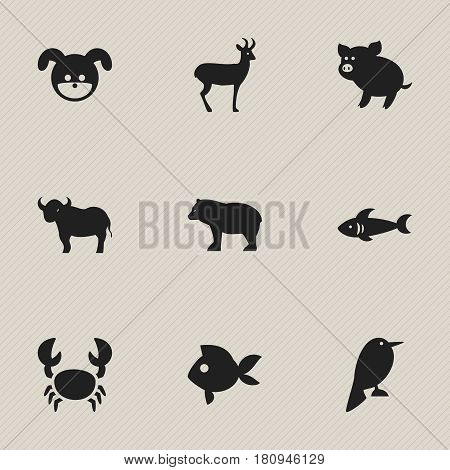 Set Of 9 Editable Zoology Icons. Includes Symbols Such As Turbot, Ox, Lobster And More. Can Be Used For Web, Mobile, UI And Infographic Design.