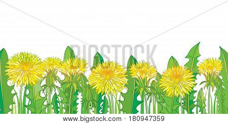 Vector horizontal border with outline yellow Dandelion or Taraxacum flower, bud and green leaves isolated on white. Dandelion field template in contour style for spring design or greeting card.