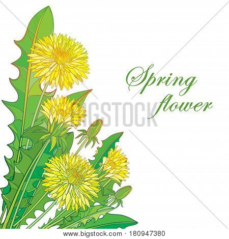 Vector bouquet with outline yellow Dandelion or Taraxacum flower, bud and green leaves isolated on white background. Ornate floral elements for spring design and greeting card in contour style.