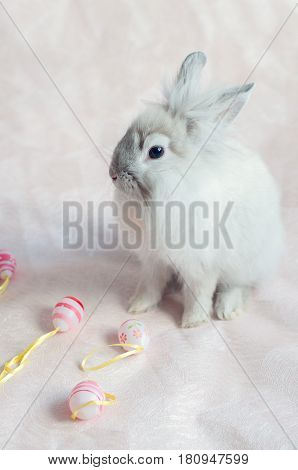Fluffy foxy rabbit with Easter eggs on light pink background.