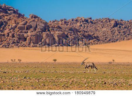 Oryx Antelope In Namib-naukluft National Park, Namibia
