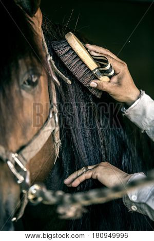 Hand of cowboy working in stable on thoroughbred horse