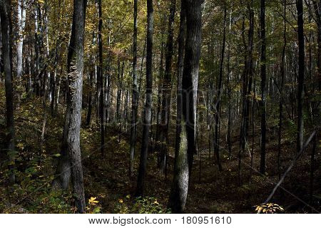 A heavily wooded gully along a hiking path in the Fires Creek Nature area near Murphy, North Carolina during the autumn