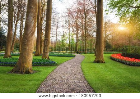 Walkway Through The Keukenhof Park In Netherlands