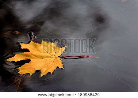 The autumn yellow leaf lies on the water.