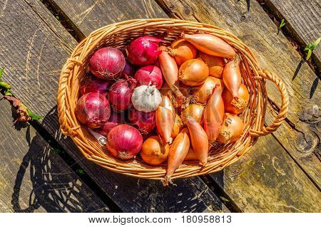 onions shallots and garlic bulbs in a wicker basket