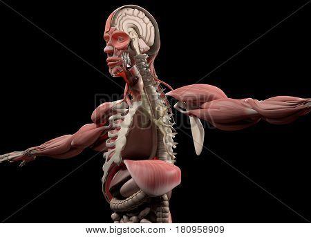 Anatomy head brain half, half head. 3D illustration.
