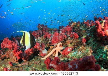 Bannerfish fish on uncerwater coral reef