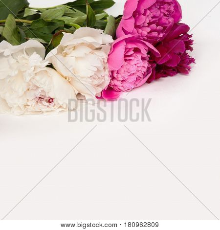 Decorative card with multicolored peonies flowers lying on white background. Beautiful Square Web Banner With Copy Space. Card for invitation congratulation.