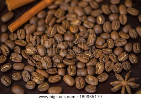 Grains of coffee close-up. Extra large arabica Maragogype bean of very high quality, considered one of the best beans in the world. Coffee break concept.
