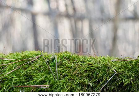 Fluffy green moss horizontal on blurred background
