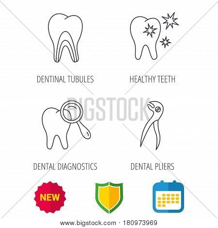 Healthy teeth, dentinal tubules and pliers icons. Dental diagnostics linear sign. Shield protection, calendar and new tag web icons. Vector