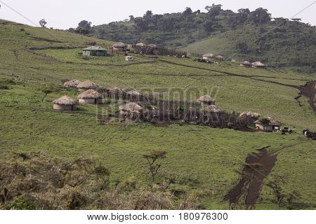 Maasai village krall in Ngorongoro Conservation Area Tanzania Africa.
