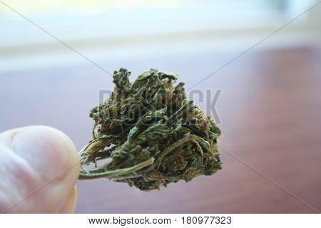 Marijuana Bud In Hand Close Up High Quality