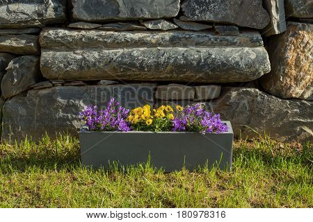 Rectangular Pot Of Flowers On The Grass With Natural Stones As Background - Violets And Bellflowers