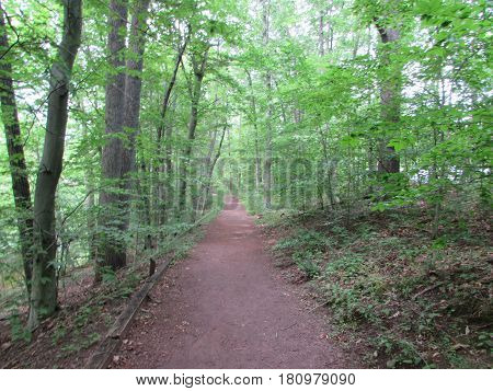 The  Path  into  the  Forest  at  the  Wildflower  Preserve,  Washington's  Crossing,  Pennsylvania.