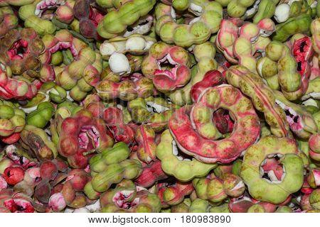 Manila tamarind Pithecellobium dulce (Roxb.) Benth .