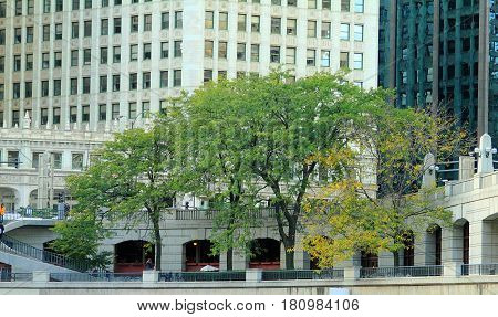 Beautiful trees on the  embankment in Chicago, IL.