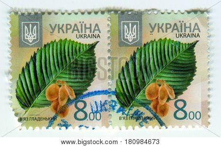 GOMEL, BELARUS, APRIL 7, 2017. Stamp printed in Ukraine shows image of  The Ulmus Laevis, circa 2012.