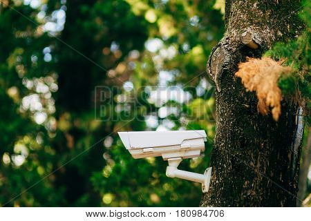 Surveillance camera on the tree. Hidden camera in the forest. Forest safety. Hidden camera.