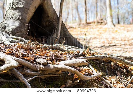 Tree hole home for the wild animal