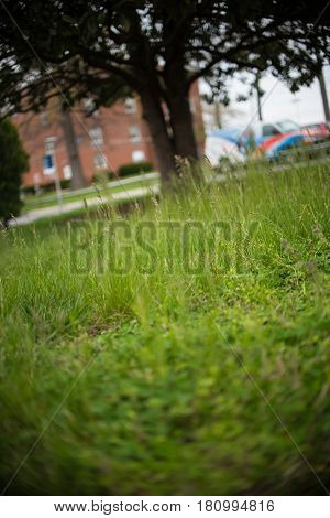 green grass with blurred background in field