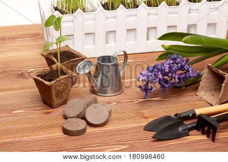 Gardening tools, peat tablets and pots, seeds and young seedlings on a wooden table on a white background. Concept of spring gardening.