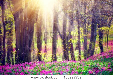 Spring Nature. Beautiful Landscape. Beauty Park with Green Grass, blooming wild flowers and Trees. Tranquil Meadow Background