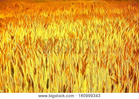 Colourful wheat field background for creative design with saturated colours