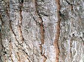 Detail of a tree trunk texture in a forest poster