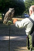 A trainer coaxing an owl to fly and land on his arm with a dead mouse. poster