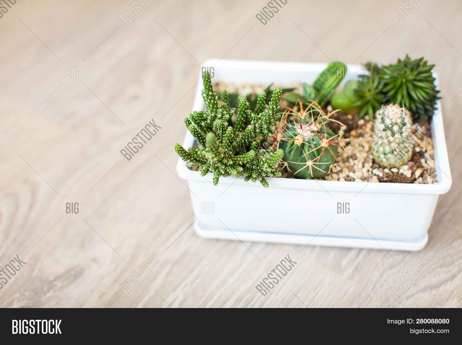 Top View House Plants Image Photo Free Trial Bigstock