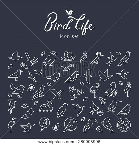 Beautiful Background With Birds Icons. Flat Birds Icon Set. Thin Line Style For Icons.vector Flat Si