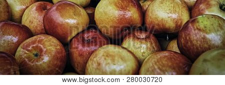 Just Picked Rippened Apples In Wooden Crates Ready To Eat.