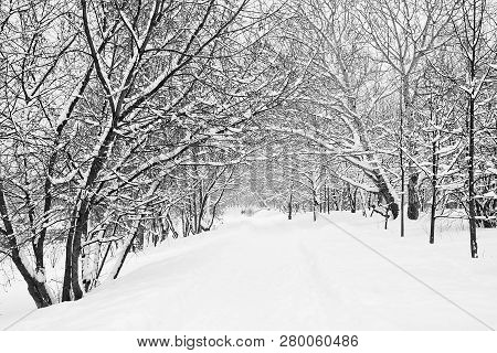 A Lot Of Snow On A Trees Black And White