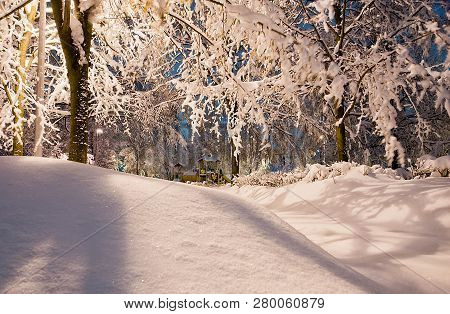 Snowdrifts And Trees In The Evening Winter Park