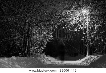 Trail Among The Trees In The Winter Park In The Evening Black And White