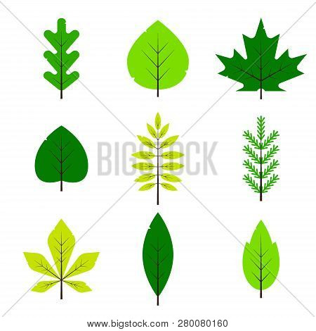 Different Green Leaves Set In Flat Style Isolated On White Background. Spring Leaf, Forest Branch Le