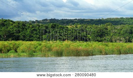Looking At The Shoreline And Jungle Of Murchison Falls National Park From The Nile River.